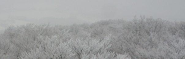 Namrzlé stromy